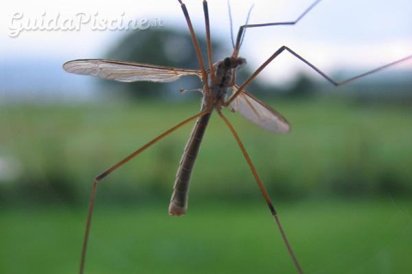 Come eliminare le zanzare senza prodotti chimici - GuidaPiscine.it