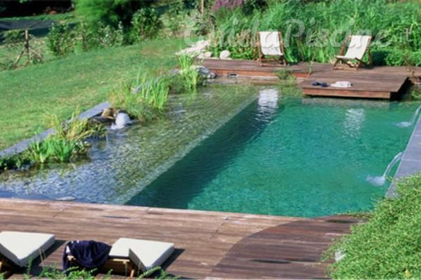 La fitodepurazione come applicarla alle piscine for Albercas ecologicas